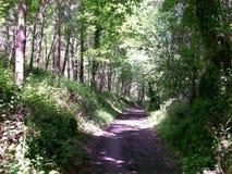 路径在森林里 免版税图库摄影