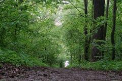 路径在森林里 图库摄影
