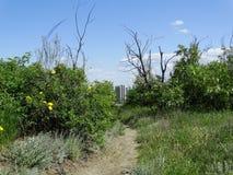 路径在森林 免版税库存照片