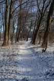 路径在森林 库存照片