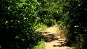 路径在森林 股票视频