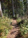 路径在森林 图库摄影