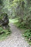 路径在森林 免版税图库摄影