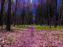 路径在森林 库存图片