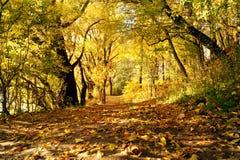 路径在秋天公园 库存图片