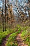 路径在秋天森林里 免版税图库摄影