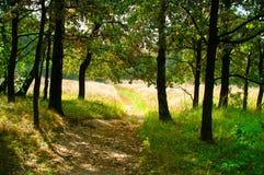 路径在秋天森林里 图库摄影