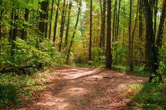 路径在秋天森林里 库存图片
