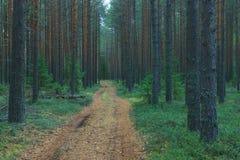 路径在秋天森林里 免版税库存照片