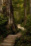 路径木头 免版税库存图片