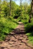 路径森林地 免版税库存图片
