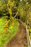 路径森林地 免版税图库摄影