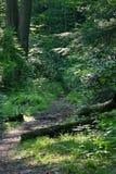 路径森林地 库存图片