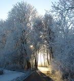 路径森林 库存图片