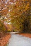 路径穿过一个五颜六色的森林 库存图片