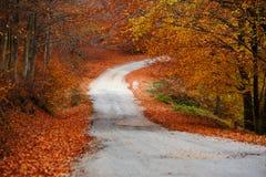 路径穿过一个五颜六色的森林 免版税库存图片