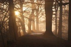 路径穿过日落的森林 免版税库存照片