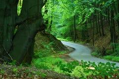 路径穿过森林 图库摄影
