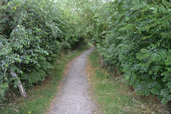 路径穿过森林 库存照片