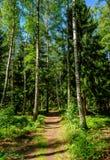 路径穿过森林 免版税图库摄影