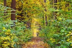 路径穿过秋天森林 免版税库存照片