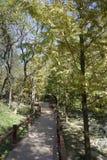 路径穿过结构树在公园 库存图片