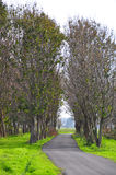 路径结构树 免版税库存图片
