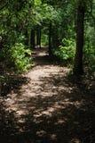 路径被遮蔽的森林 免版税库存图片