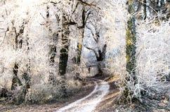 冻结路径 库存图片