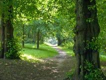 路径throuh结构树 图库摄影