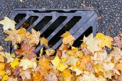 路排水设备金属格栅有秋天槭树叶子的流失盖子 免版税库存图片