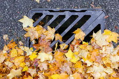 路排水设备金属格栅有秋天槭树叶子的流失盖子 免版税图库摄影