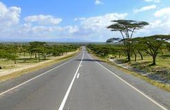 路接近。在自然附近风景,异想天开的树。 免版税库存图片