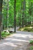 路摄影在森林里 免版税库存照片
