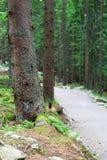 路摄影在森林里 库存图片