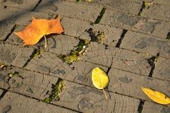 路放置与被保存的木砖 图库摄影