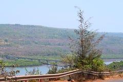 路旁与桥梁的木麻黄属的各种常绿乔木树在河和小山-环境美化在Konkan地区, Inida 库存图片