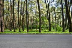 路旁和森林 免版税库存图片