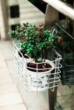 路旁工艺植物 免版税库存照片