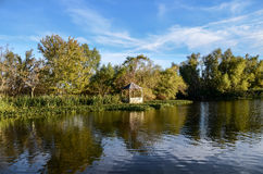 路易斯安那多沼泽的支流,风景 免版税库存图片