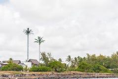 路易港,毛里求斯- 2015年10月06日:作为天线的棕榈树在毛里求斯 免版税图库摄影