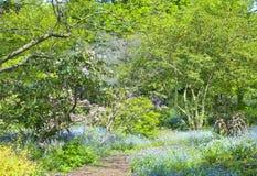 路春天从事园艺与野花 库存图片