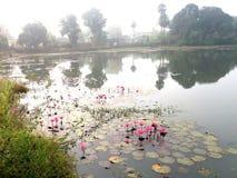 路有waterlily fower树的边池塘 免版税库存照片