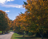 路标示用槭树在秋天 库存图片