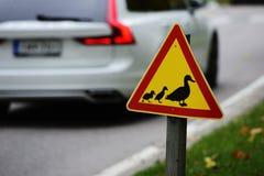 路标,通过路的鸭子 免版税库存照片