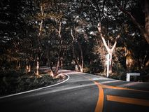 路树热带森林在夏天 库存照片