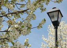 路灯柱结构树 免版税库存图片