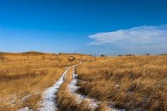 路用雪盖通过有高草的一个草甸 库存照片