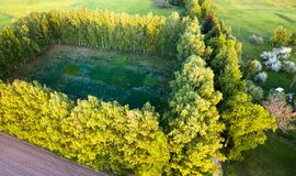 路的寄生虫照片在树之间的在五颜六色的早期的春天- 免版税库存图片