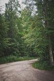 路的森林轮在树543中的 库存照片